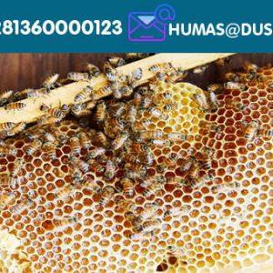 Madu Lebah Alami (Multi-bunga)